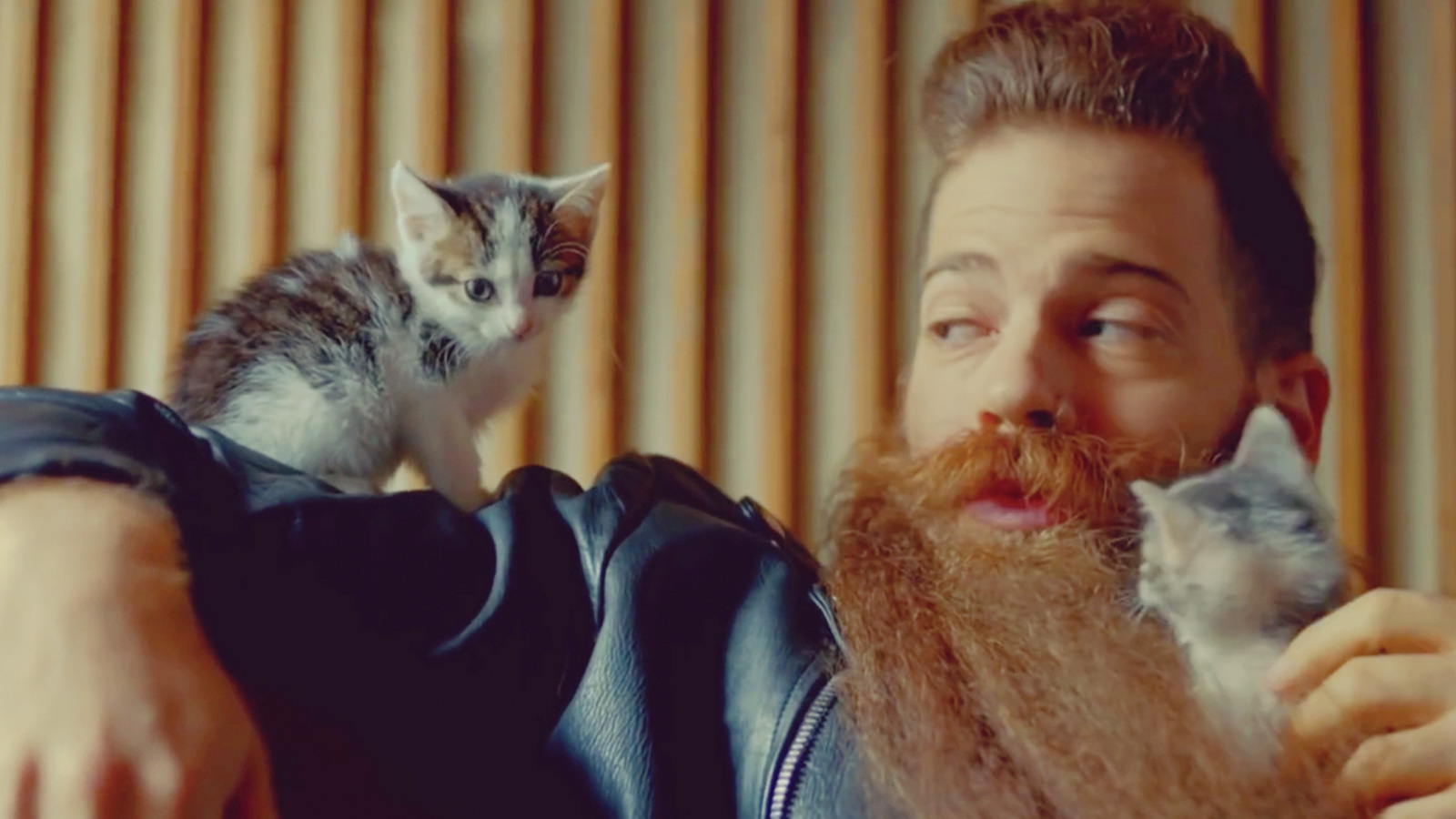 man makeover beard cat